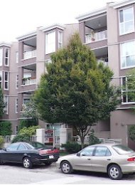 La Residences Unfurnished 2 Bedroom Apartment For Rent in East Vancouver. 103 - 1688 East 8th Avenue, Vancouver, BC, Canada.