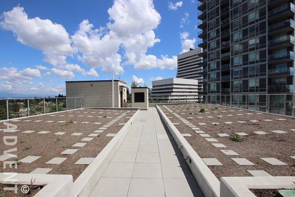Modern 9th Floor 1 Bed + Flex & Solarium Apartment Rental at Wall Centre Central Park in Collingwood. 916 - 5470 Orimdale Street, Vancouver, BC, Canada.